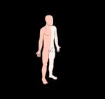 633px-Plano_anatomico_Sagital.svg