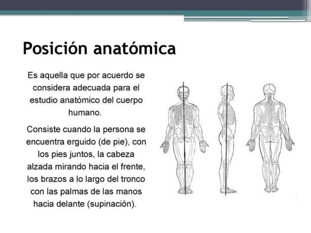 L-2 Posición anatómica