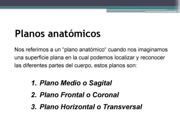 L-4 Planos anatómicos