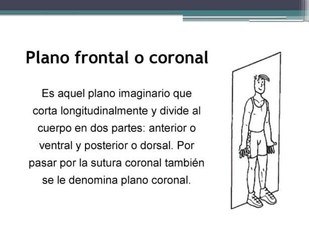 L-6 Pano frontal o coronal