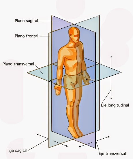 Planos_posición_anatómica